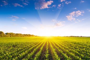 Обратно начисляване на ДДС в земеделието при закупуване на зърнени и технически култури
